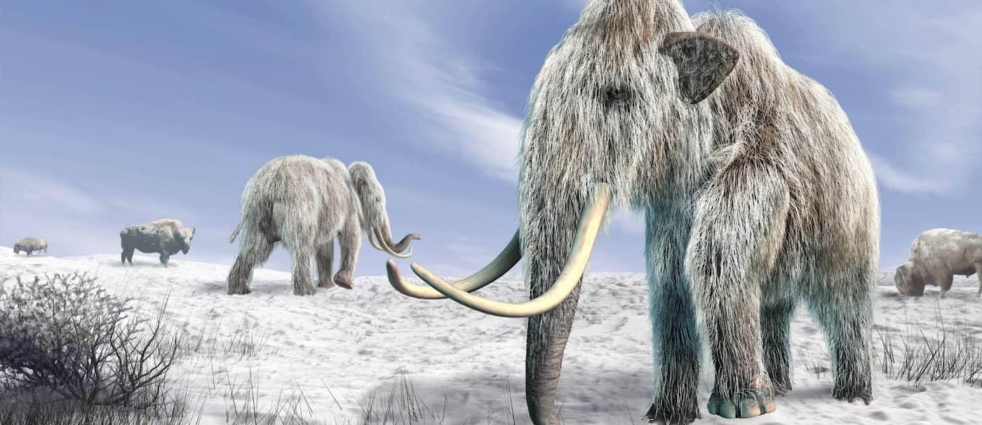 Una compañía busca revivir al mamut lanudo, extinto hace unos 4.000 años