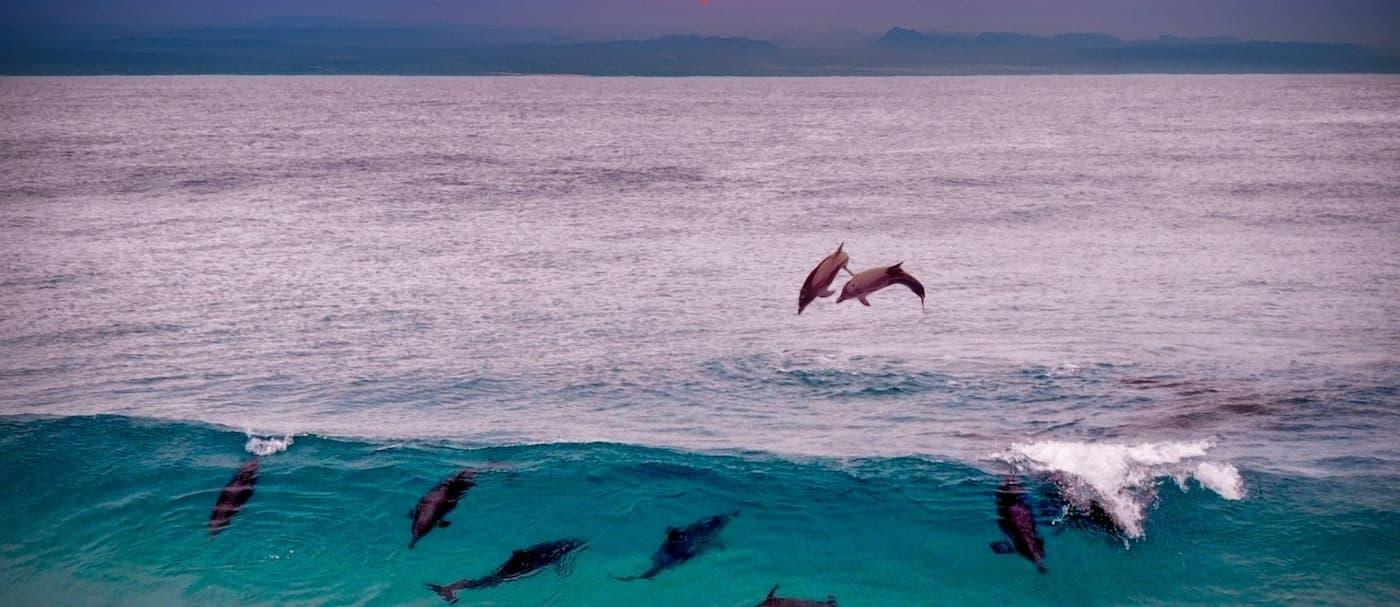 Más de 1.400 delfines fueron masacrados en las Islas Feroe