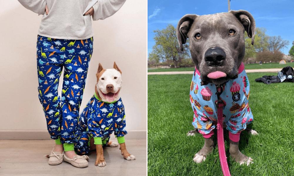 Esta mujer diseña coloridos pijamas para perros para erradicar el estigma contra los pitbulls-7