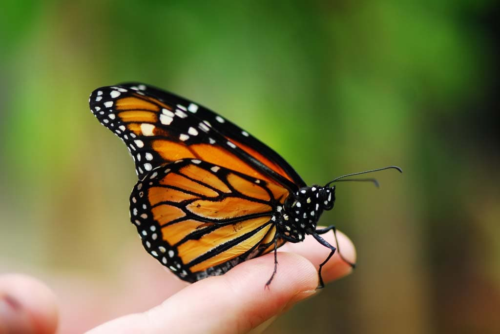 México realiza actividades de reforestación y preservación en la región de la mariposa Monarca-2
