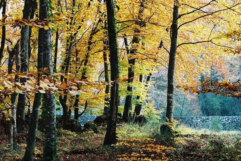 Bosques-Mas-Bonitos-De-Europa