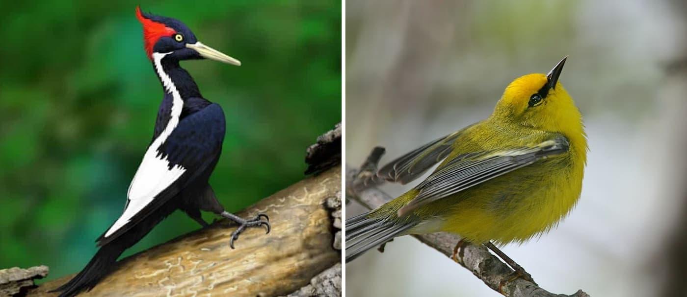 Estados Unidos declaró como extintas a 23 especies