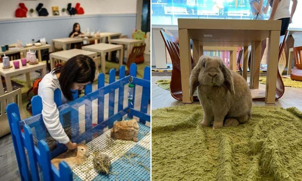 Rabbitland Cafe El insólito café en Hong Kong donde los conejos se pasean al lado de los comensales
