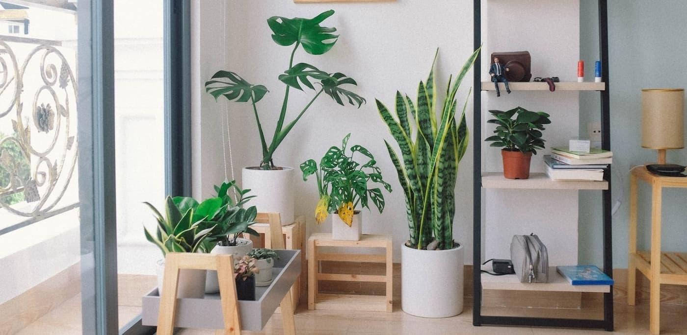 Rodearse de plantas aumenta la felicidad y reduce el estrés, de acuerdo a un nuevo estudio