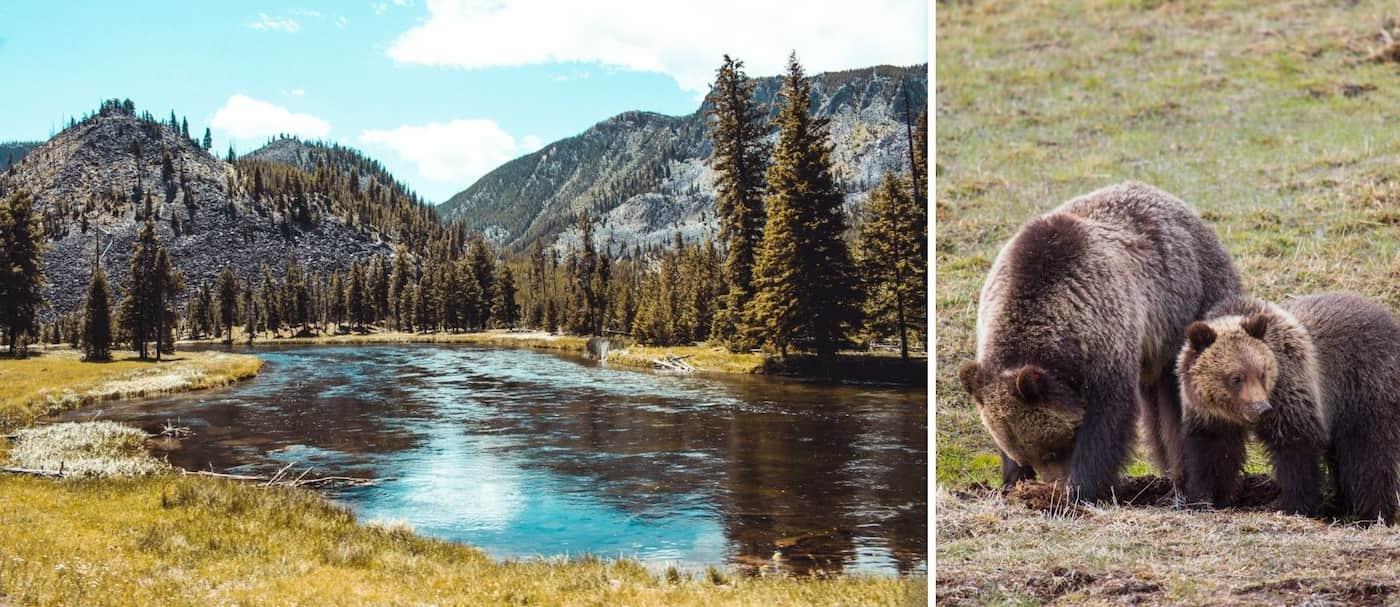Una mujer que le tomó una foto de cerca a una osa grizzly fue sentenciada a 4 días de prisión