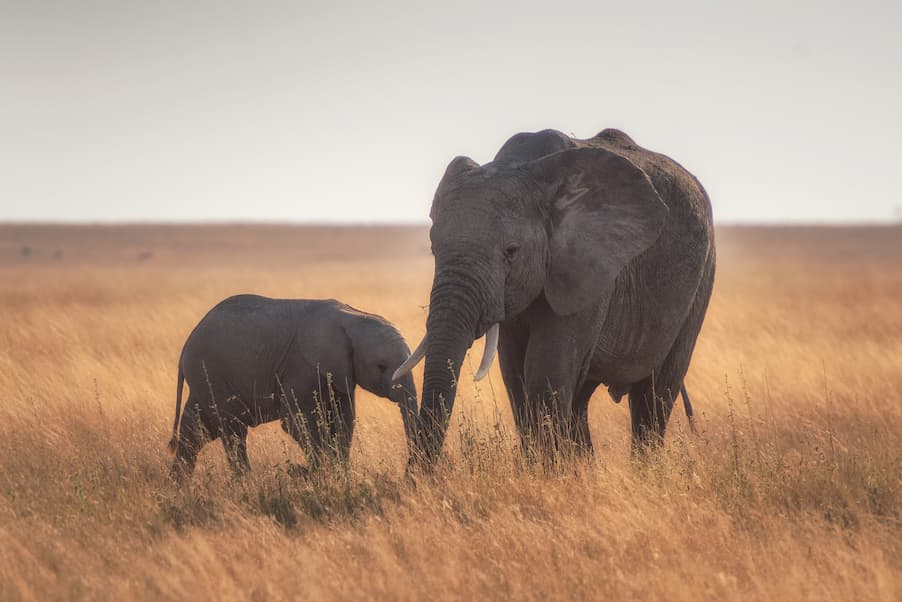 bebe elefante