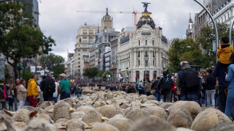Miles de ovejas se apoderan de las calles de Madrid